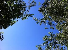 Trees & Colorado Blue Sky